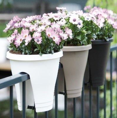 balkon çiçeği papatya