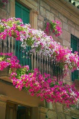 Balkonda çiçek önerileri