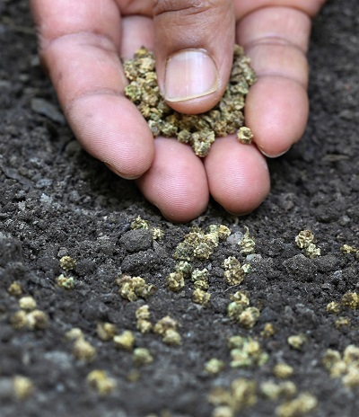 ıspanak tohumu ekimi