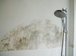 banyo küfü nasıl temizlenir