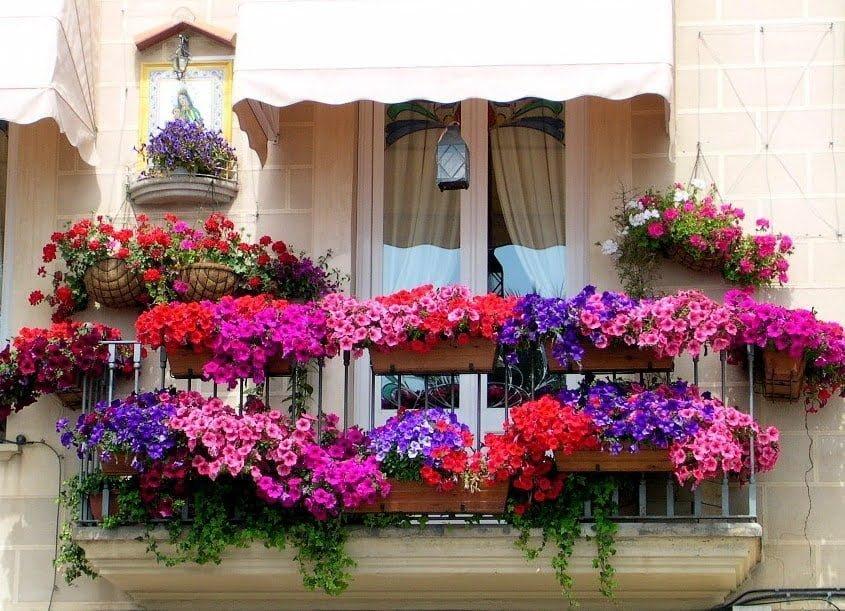 balkon cicekleri